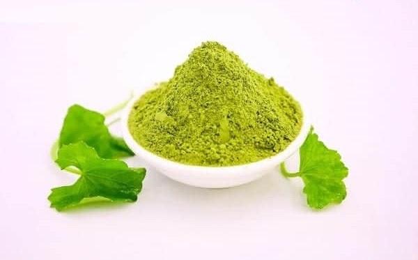 sấy lạnh bột rau má để có thể bảo toàn nguyên vẹn chất dinh dưỡng