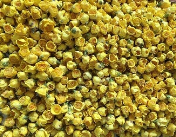 sấy khô hoa trà vàng